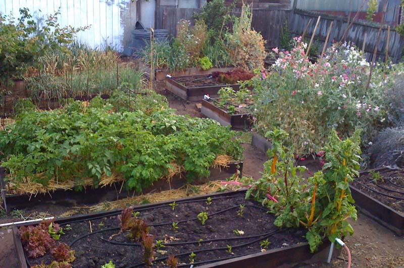 Oakland Urban Farm Vegetable Beds