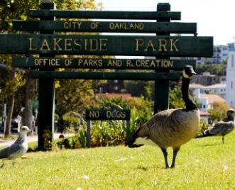 Lake Merritt Lakeside Park & Wildlife Refuge