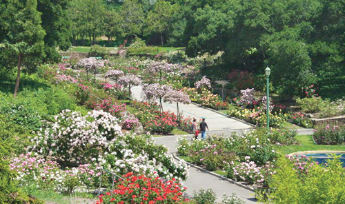 Photo of the Morcom Rose Garden