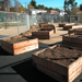 Thumbnail of  Bella Vista Community Garden