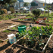 Thumbnail of Temescal Community Garden
