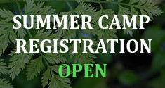 Image: Summer Camp Registration OPEN