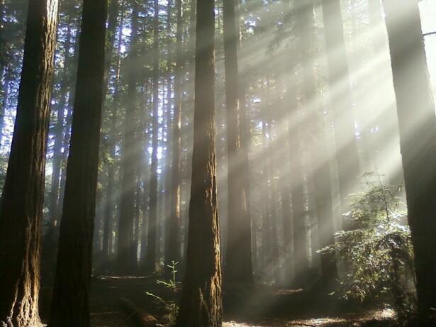 Photo of Joaquin Miller Park Redwoods