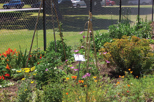 Photo of a Community Garden