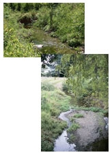Photo of Oakland Creeks