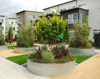 planters water conservation and solar at Tassafaronga village