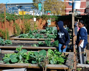 photo of youth in garden at East Oakland Boxing Association
