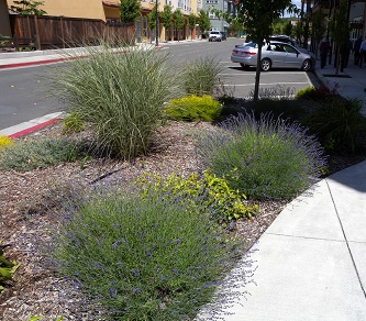 Greenscape installed at Oakland sidewalk to filter stormwater, featuring native and drought-tolerant plants