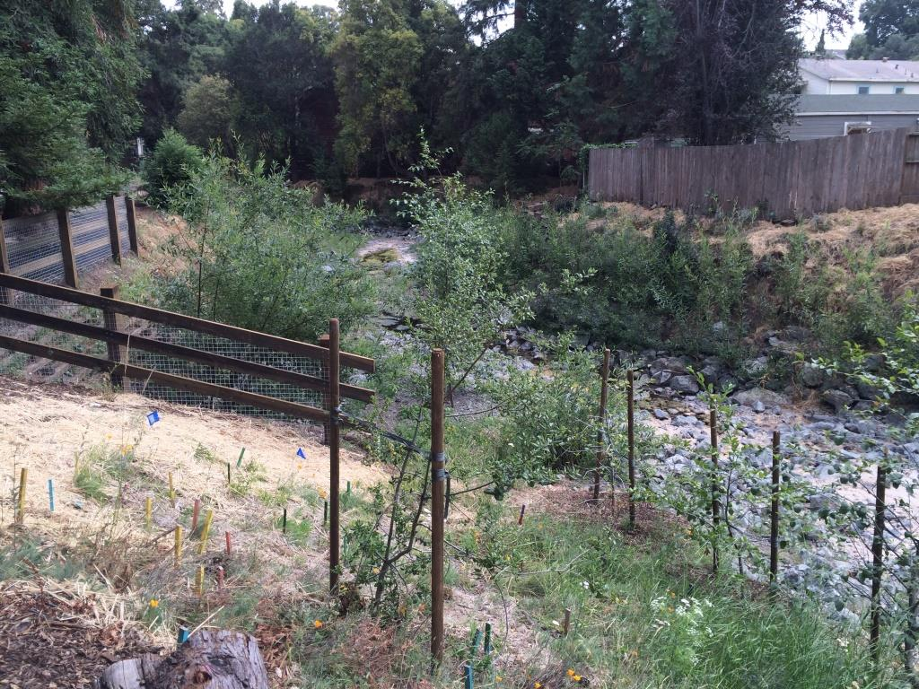 Sausal Creek_4