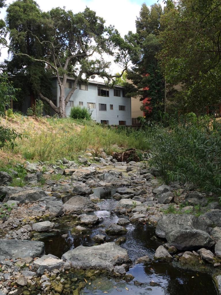 Sausal Creek_6